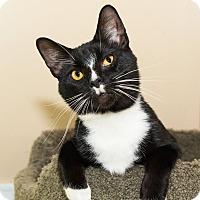 Adopt A Pet :: Kanye West - Seville, OH