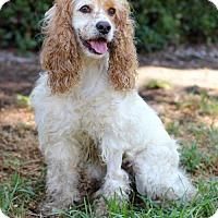 Adopt A Pet :: Dalilah - San Diego, CA