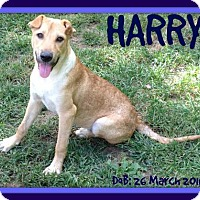 Adopt A Pet :: HARRY - Sebec, ME