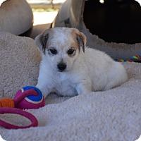 Adopt A Pet :: Cane - Groton, MA