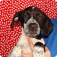 Adopt A Pet :: Neptune - Oviedo, FL