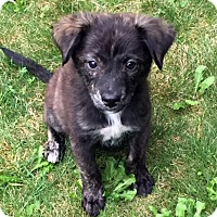 Adopt A Pet :: Snickers - Harrison, NY