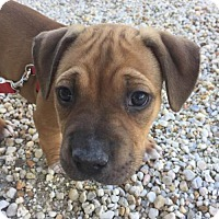 Adopt A Pet :: Bonnie - Key Largo, FL