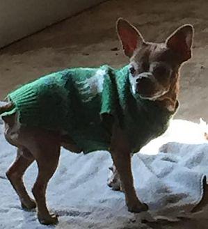 Chihuahua/Boston Terrier Mix Dog for adoption in Alvarado, Texas - Monkey Boy
