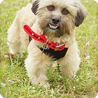 Adopt A Pet :: Mitzi - Davie, FL