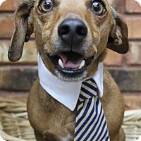 Adopt A Pet :: Dub - Benbrook, TX