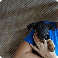 Adopt A Pet :: Tinsel - Oviedo, FL
