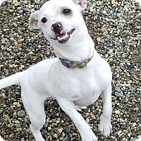 Adopt A Pet :: Gracie - Lompoc, CA