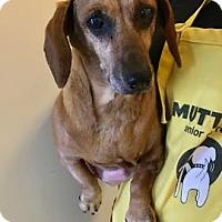 Adopt A Pet :: Cinnamon - San Francisco, CA