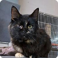 Adopt A Pet :: Prisilla - Henderson, KY