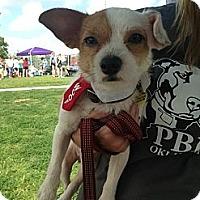 Adopt A Pet :: Pixel - Blanchard, OK