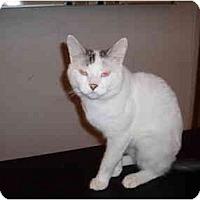 Adopt A Pet :: Marvin - Hamburg, NY