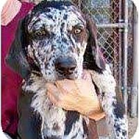 Adopt A Pet :: Landon - Richmond, VA