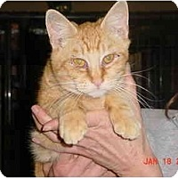 Adopt A Pet :: Diego - Pendleton, OR