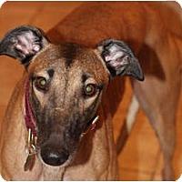 Adopt A Pet :: Kelsey - N. BABYLON, NY