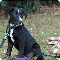 Adopt A Pet :: Seychelles - Cumming, GA