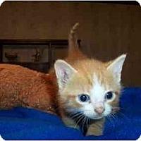 Adopt A Pet :: Alex - Frenchtown, NJ