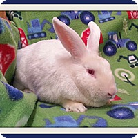 Adopt A Pet :: Ron - Williston, FL