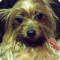 Adopt A Pet :: Amy - Lorain, OH