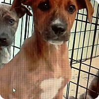 Adopt A Pet :: Libby - Philadelphia, PA