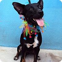 Adopt A Pet :: Mila - San Diego, CA