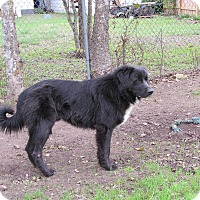 Adopt A Pet :: Dozer - West Hartford, CT