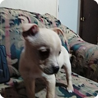 Adopt A Pet :: Wylie - springtown, TX