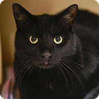 Adopt A Pet :: Binxy - Kettering, OH