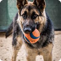 Adopt A Pet :: Bardo - Phoenix, AZ