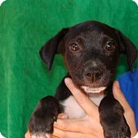 Adopt A Pet :: Quincy - Oviedo, FL