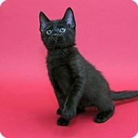 Adopt A Pet :: Oliver - Garland, TX