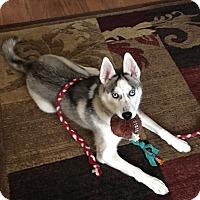 Adopt A Pet :: Nova - Saint Albans, WV