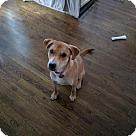 Adopt A Pet :: Gigi aka Sadie