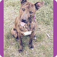Adopt A Pet :: Zeda - Little Rock, AR