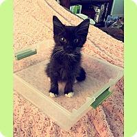 Adopt A Pet :: Tootsie - San Juan Capistrano, CA