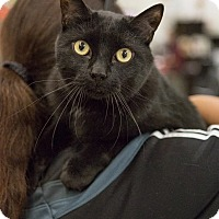 Adopt A Pet :: Pluto - Toronto, ON