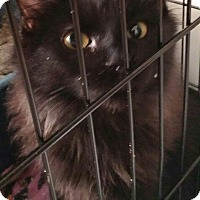 Adopt A Pet :: Salem - Denver, CO