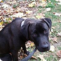 Adopt A Pet :: Lucy - Allison Park, PA