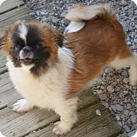 Adopt A Pet :: Hunter - LaGrange, OH