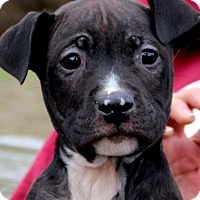 Adopt A Pet :: Givenchy - Glastonbury, CT
