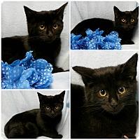 Adopt A Pet :: Hemi - Forked River, NJ