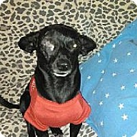 Adopt A Pet :: Mojo - Bakersfield, CA