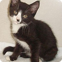 Adopt A Pet :: Hector - Germansville, PA