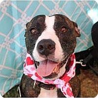 Adopt A Pet :: Sasha - Rowlett, TX