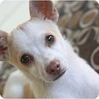 Adopt A Pet :: Hopper - san diego, CA