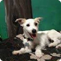 Adopt A Pet :: hijack - Goleta, CA