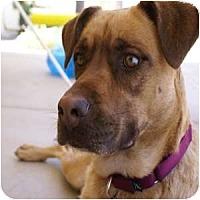Adopt A Pet :: Sirena - Phoenix, AZ