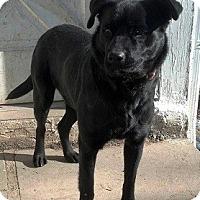 Adopt A Pet :: McKayla - North Wales, PA