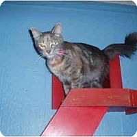 Adopt A Pet :: Navaeh - Hamburg, NY