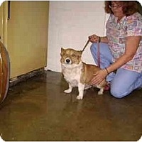 Adopt A Pet :: Mitch - Inola, OK